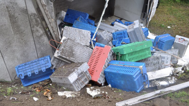 Peta Requests A Tombstone For Lobsters Killed In Maine Truck Accident